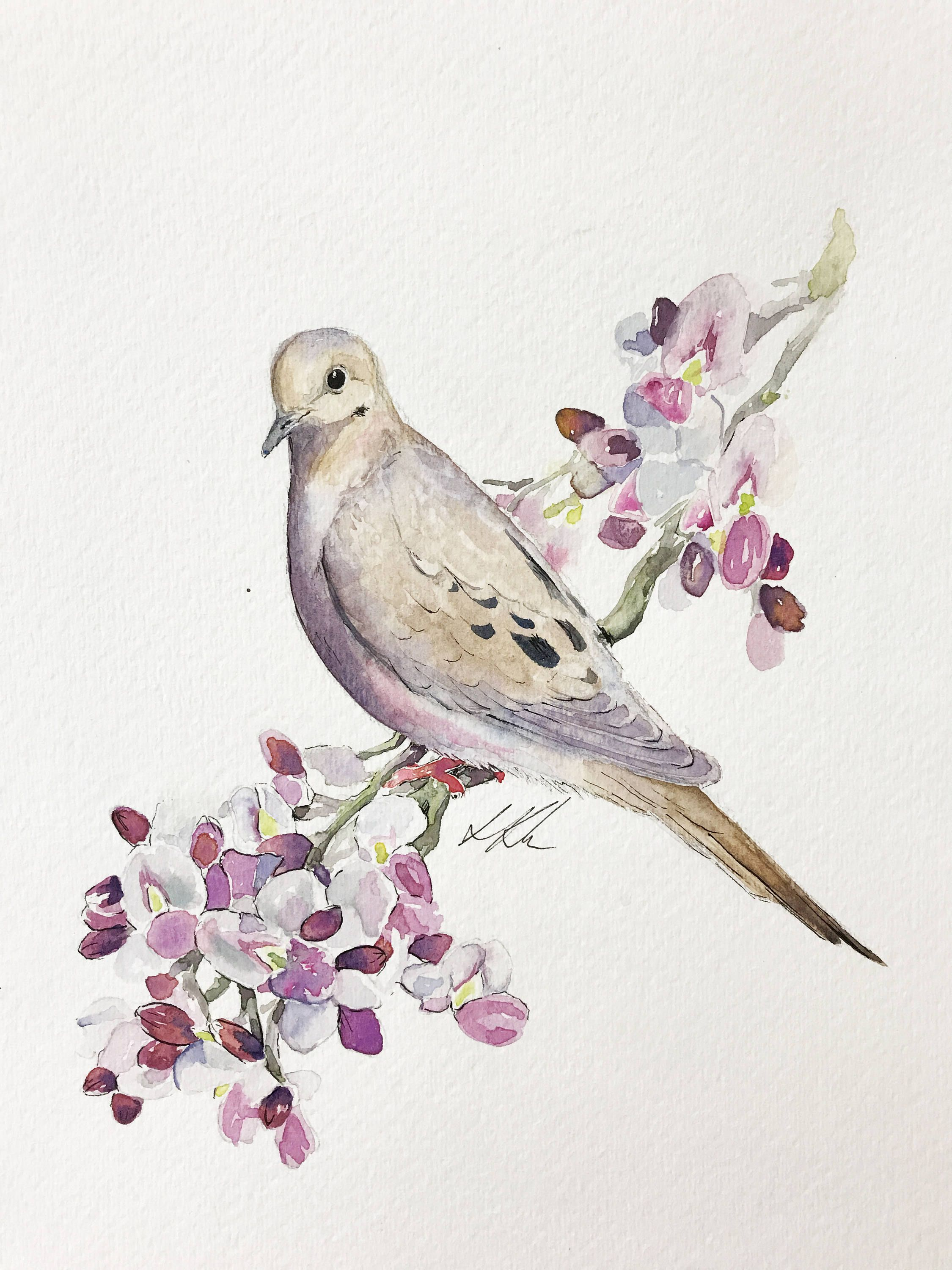 Mourning Dove Watercolor Painting Bird Drawings Watercolor