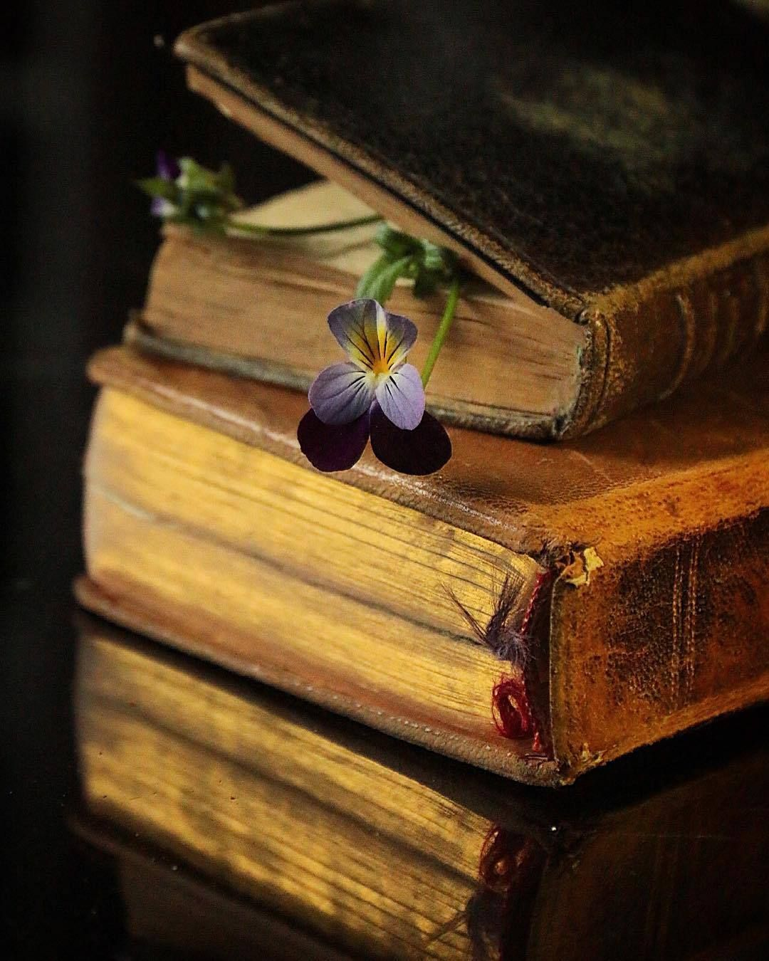 Libri E Fiori Books And Flowers With Images Book Aesthetic Vintage Books Book Flowers