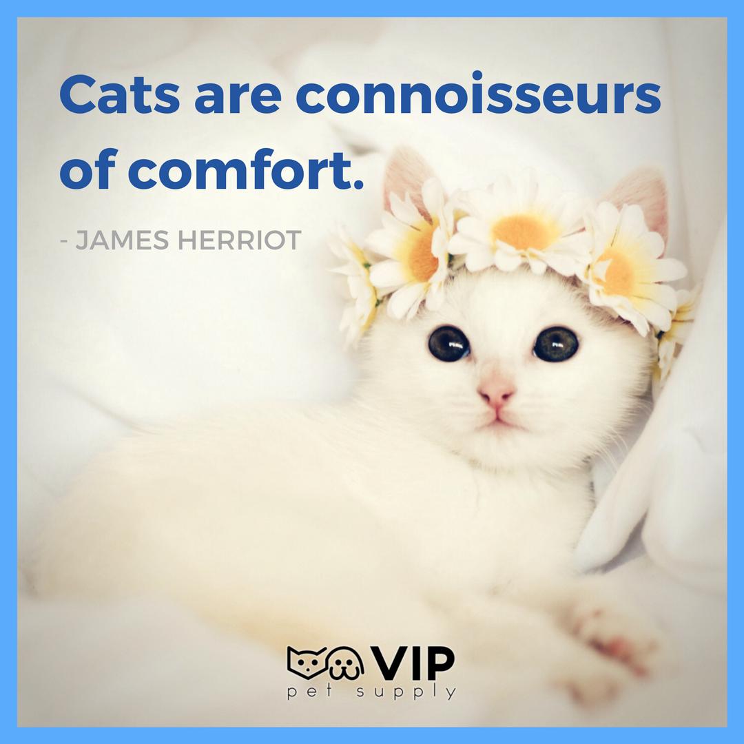 """Cats are connoisseurs of comfort."" James Herriot"