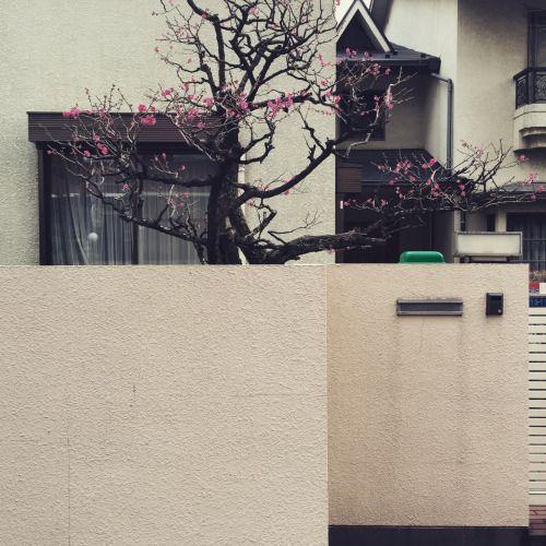 Looking Out My Front Door Oyl In Tokyo Pinterest Front Doors