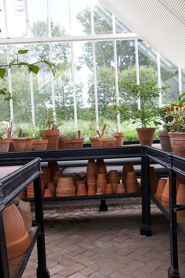 Growing with plants: The Living Historical Collections of Amy Goldman-Fowler