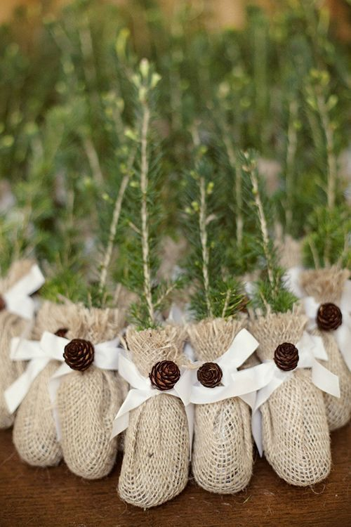 Tree saplings wrapped in burlap and tied with twine are eco-friendly wedding favors and great for a winter wedding | Brides