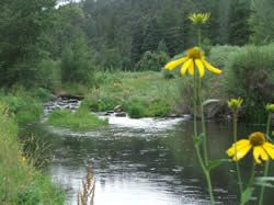 The Cimarron River provides habitat for beaver, waterfowl and several species of trout.