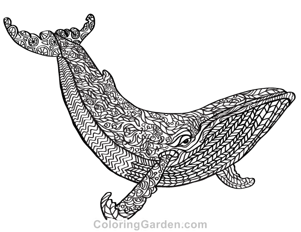 free printable whale adult coloring page download it in pdf format at http