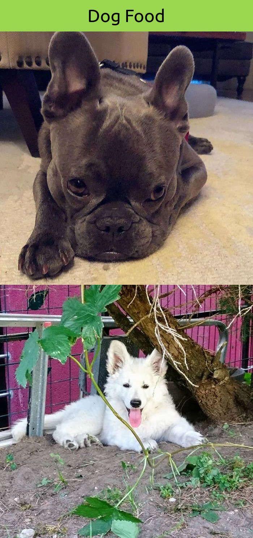 Funny dog names girl dog training obedience animals pinterest