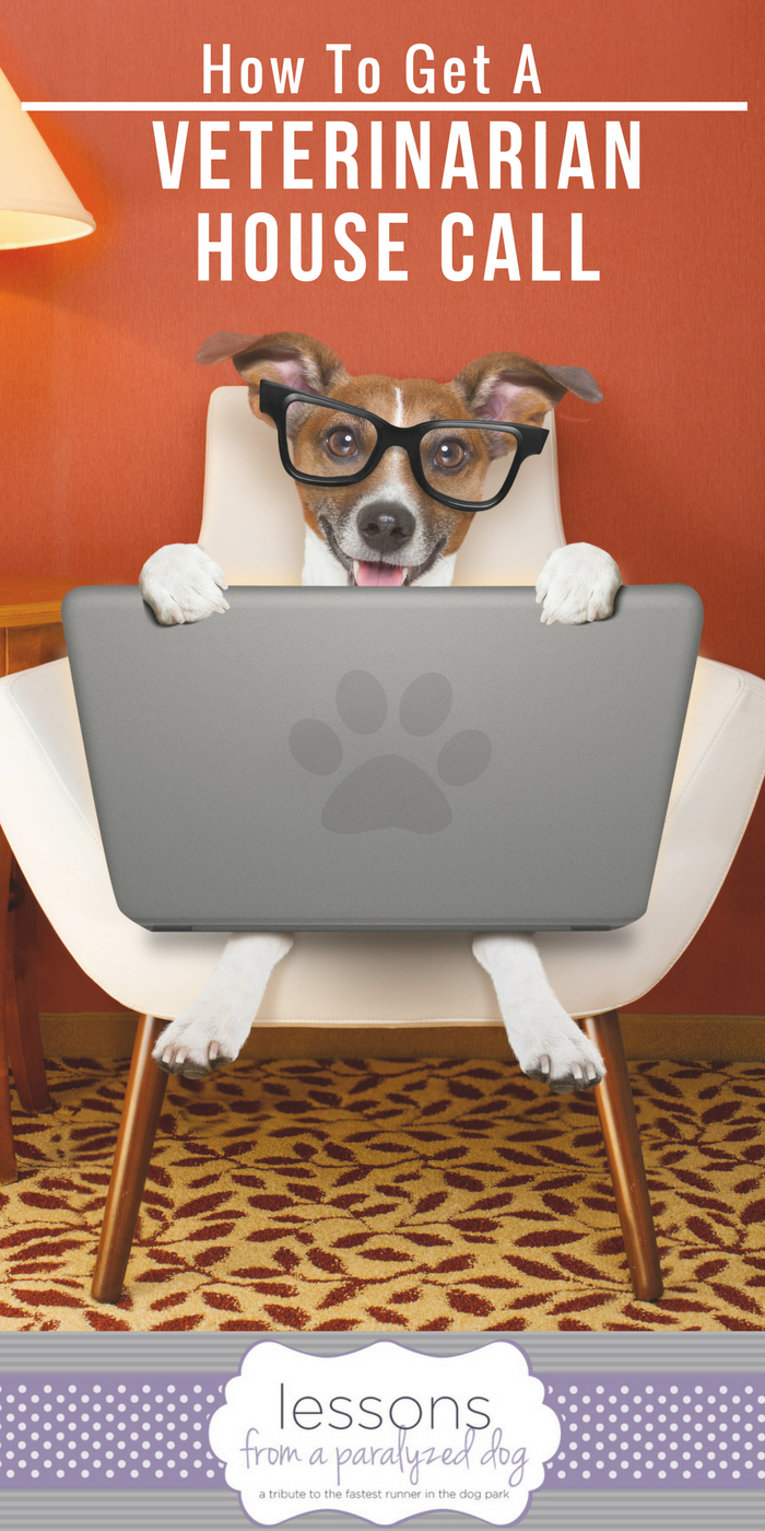 Would Your Dog Like A Veterinarian House Call Cat Care House