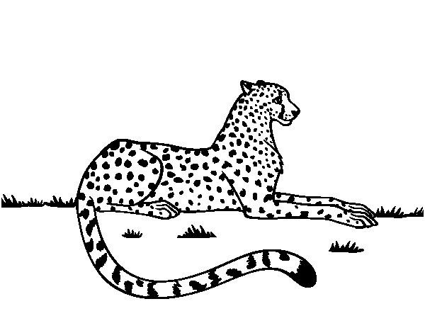 Coloriage De Guepard Reposant Pour Colorier Coloritou De Coloriage Guepard En 2020 Coloriage Coloriage Dauphin Guepard