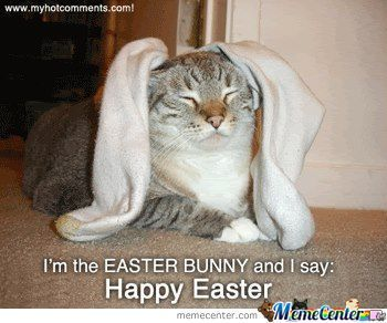 Happy Easter from your Cat!