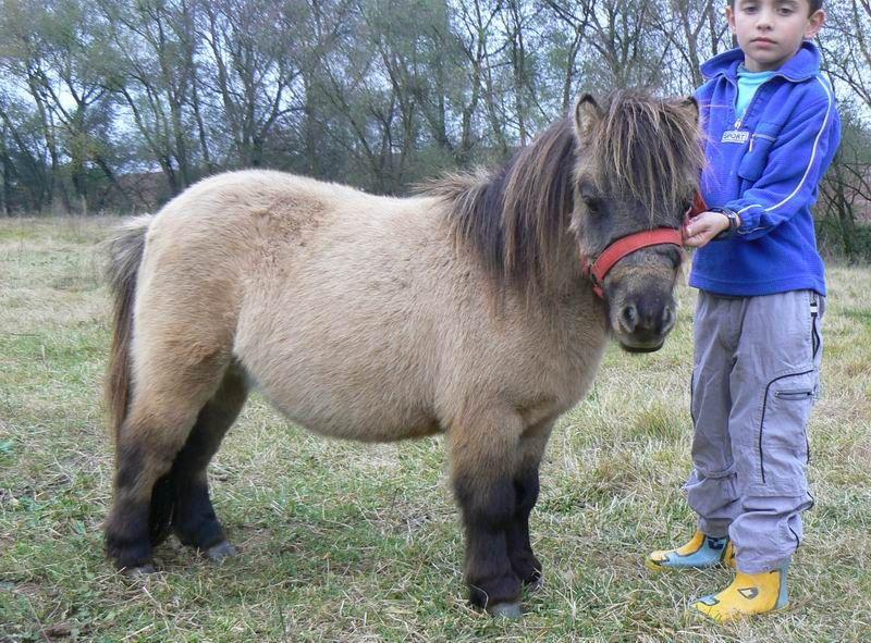 33+ Real pony info
