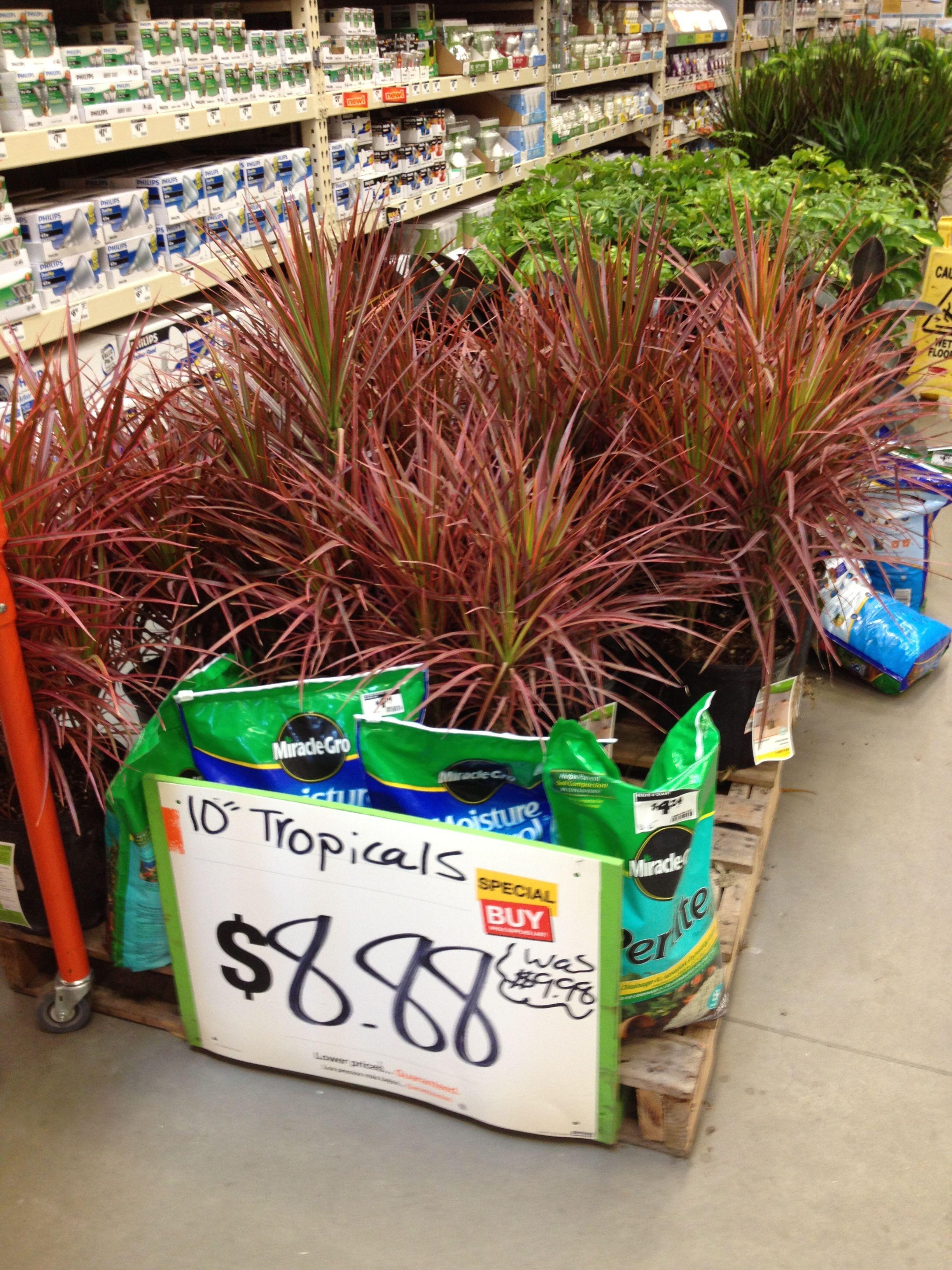 Home Depot plant sale $8 88 for big pretty house plants Do it