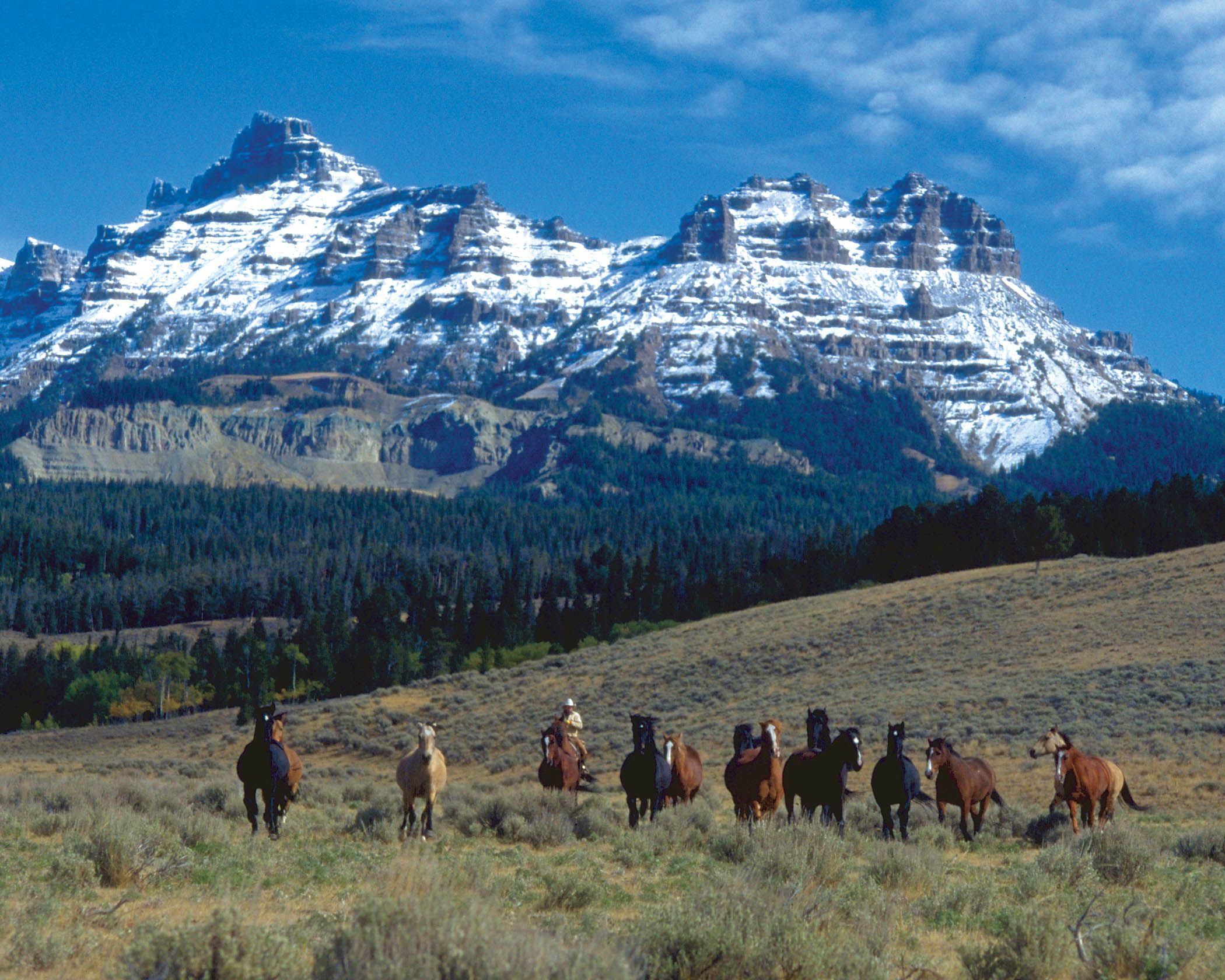 Eatons Ranch - Wolf, WY | Dude ranch vacations, Dude ranch
