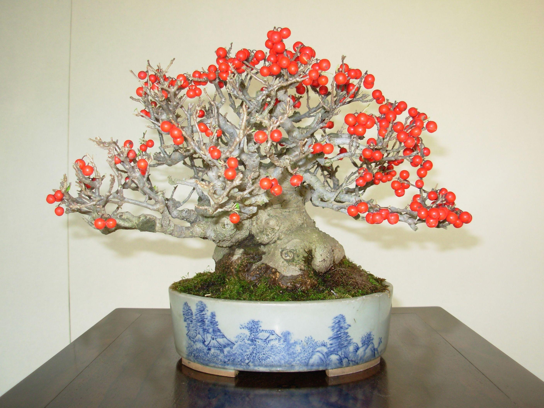 árbol bonsai de floración