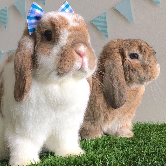 Pin Von Nadin Lindner Auf Cute Kaninchen Hase