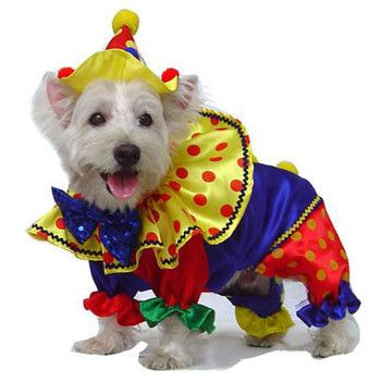 shiny clown dog costume size 3 l quickly view this special dog product click the image accessories for dog
