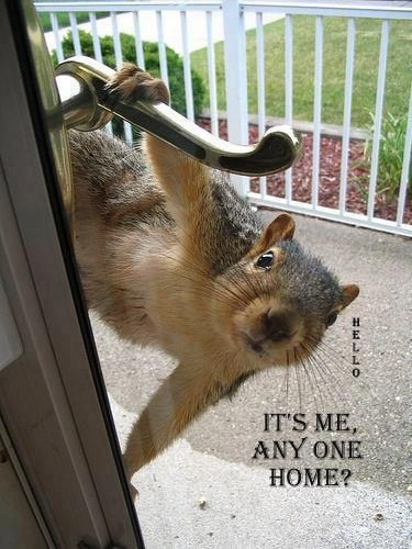Pin By Samantha Foresteire On Humor Wisecracks Truth Squirrel Funny Cute Animals Funny Animals