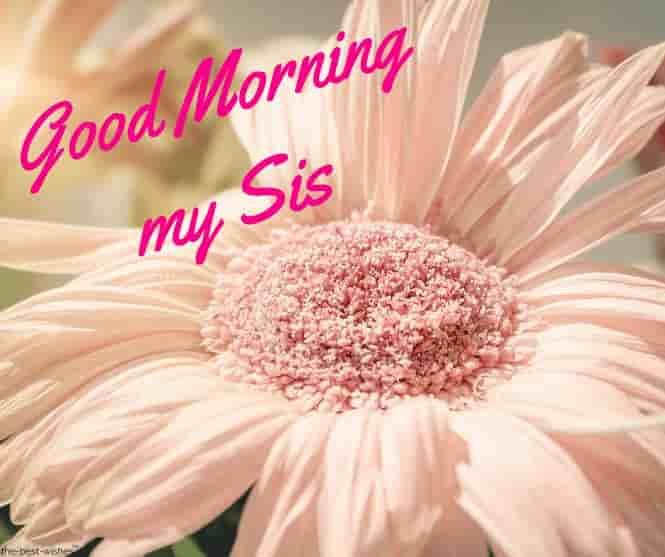 Good Morning My Sis Images Gm Sissy Good Morning Wishes Morning