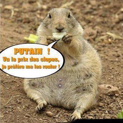 image animaux humour