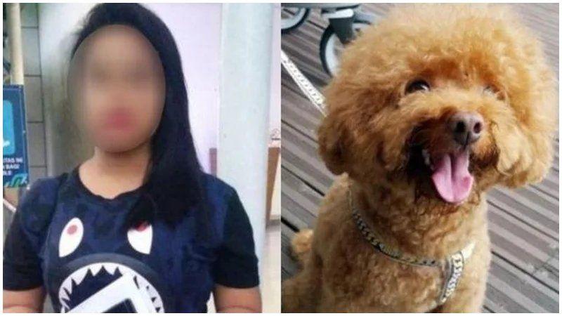 Tkw Indonesia Di Singapura Terancam Dipenjara Karena Lempar Anjing Majikan Dari Lantai 3 Animals Dogs