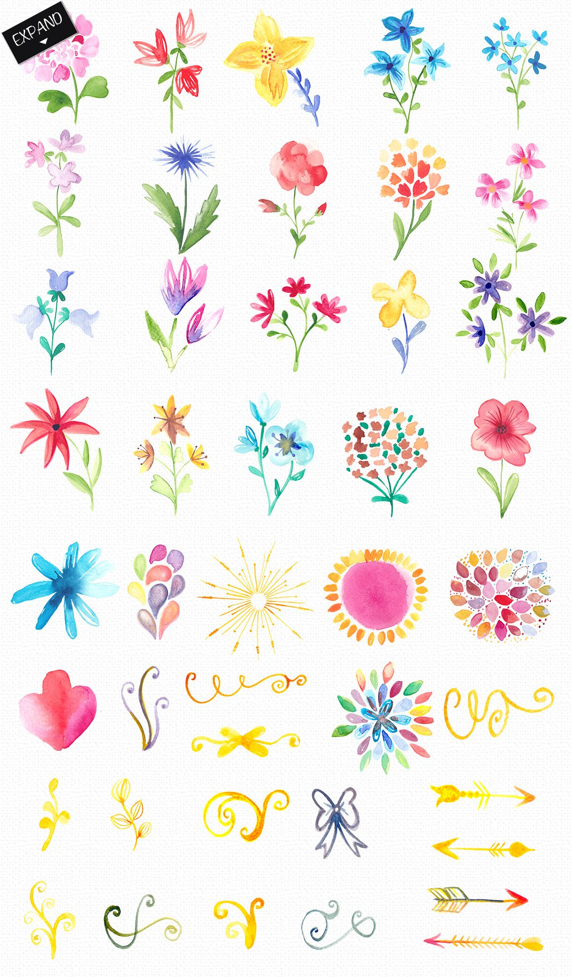 Watercolor Flowers And Decorations Flower Drawing Flower Art