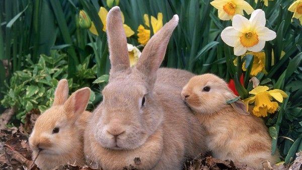 Mama Coneja Animales Conejos Wallpaper Suaves Conejos Blancos