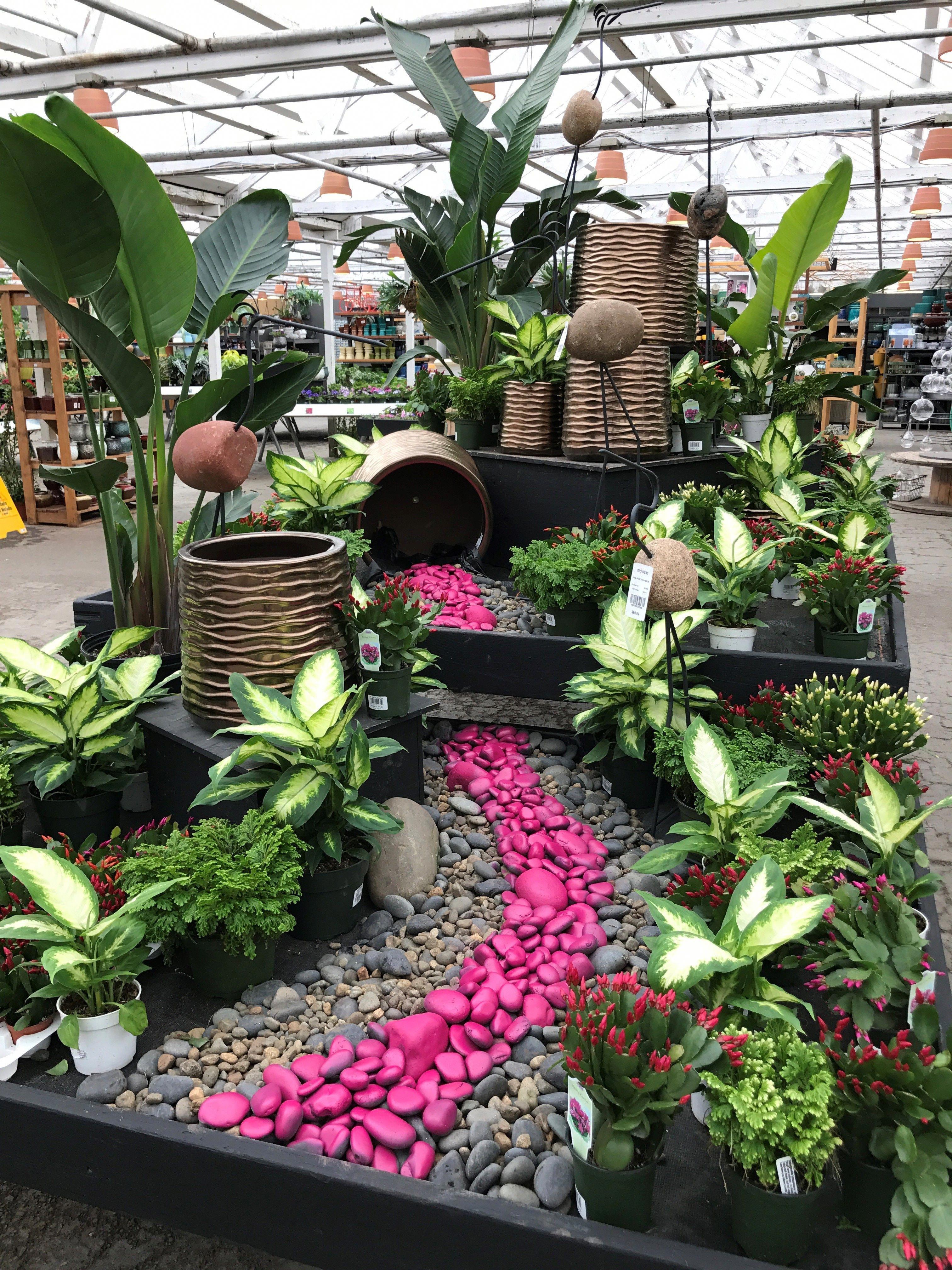 Easter Cactus Display At Molbak S Gardennursery Garden Center