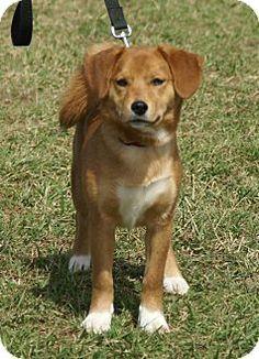 Image Result For Beagle Mix Beagle Mix Beagle Beagle Dog