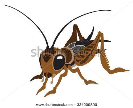 Cartoon Cricket Bug Cricket Bug Cartoon Cartoons Vector