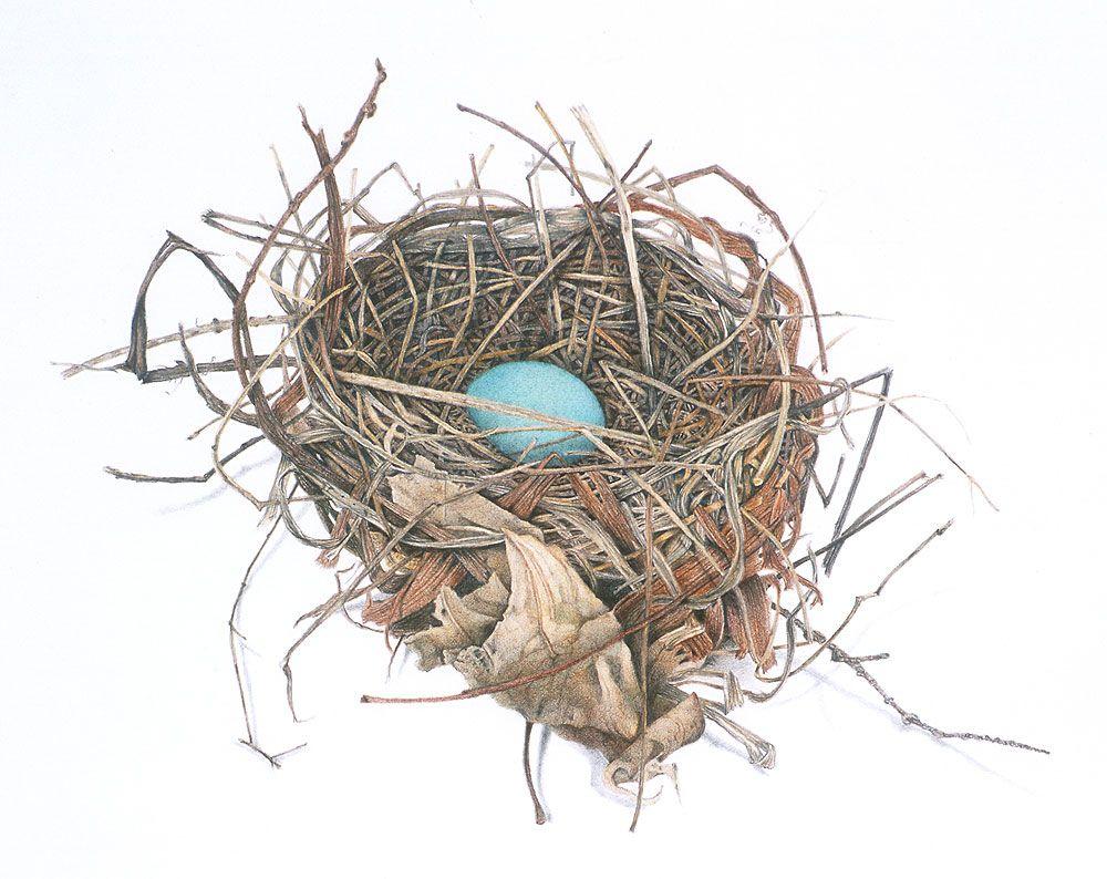 Bird S Nest D L Freidman Colorful Bird Tattoos Bird Drawings