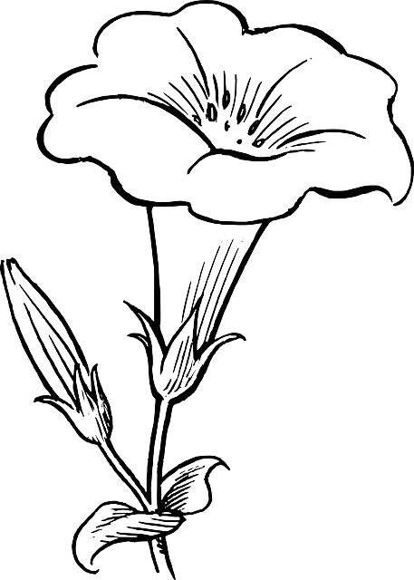 Red Flower Line Drawing : Black outline drawing flower white flowers free