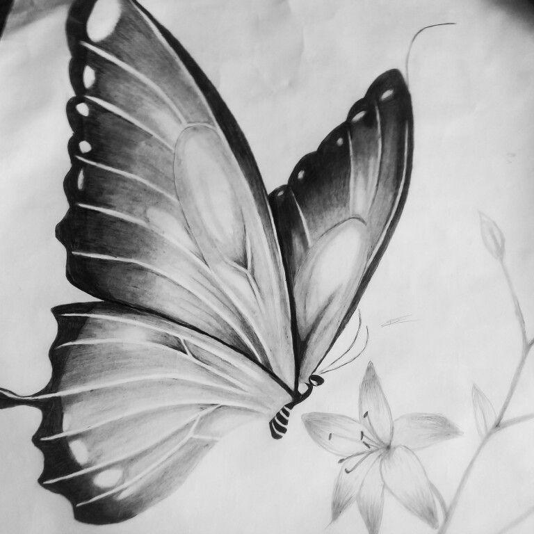 Mariposa Dibujo A Lapiz Mariposas Dibujos A Lapiz Mariposas A Lapiz Dibujos A Lapiz Rosas