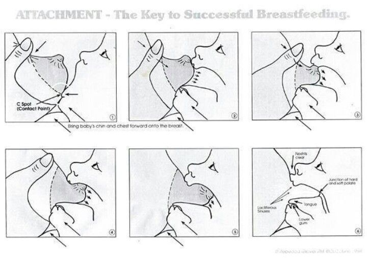 Breastfeeding Diagram Breastfeeding Moms Baby Breastfeeding Breastfeeding
