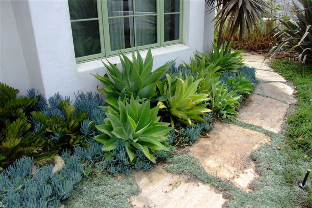 Drifts Of Agave And Succulents Desert Landscape Front Yard