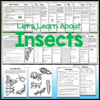 Insects Worksheets and Activities with Test and Answer ...