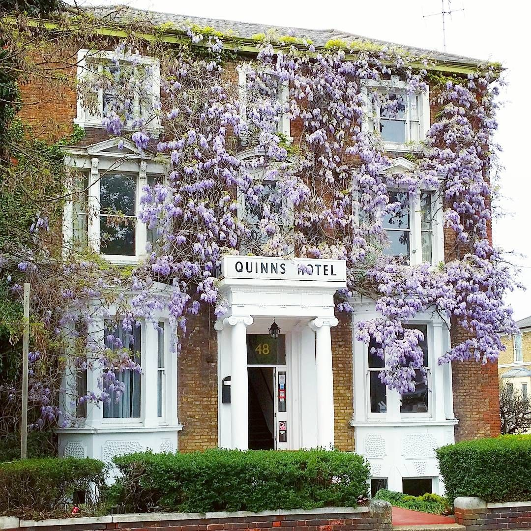 Hello, reception? I'd like a room to stay in forever, please.  #wisteria