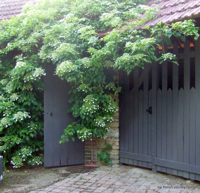 Climbing Hydrangea Vine. Grows anywhere and is so beautiful! Best plant i ever planted!!!