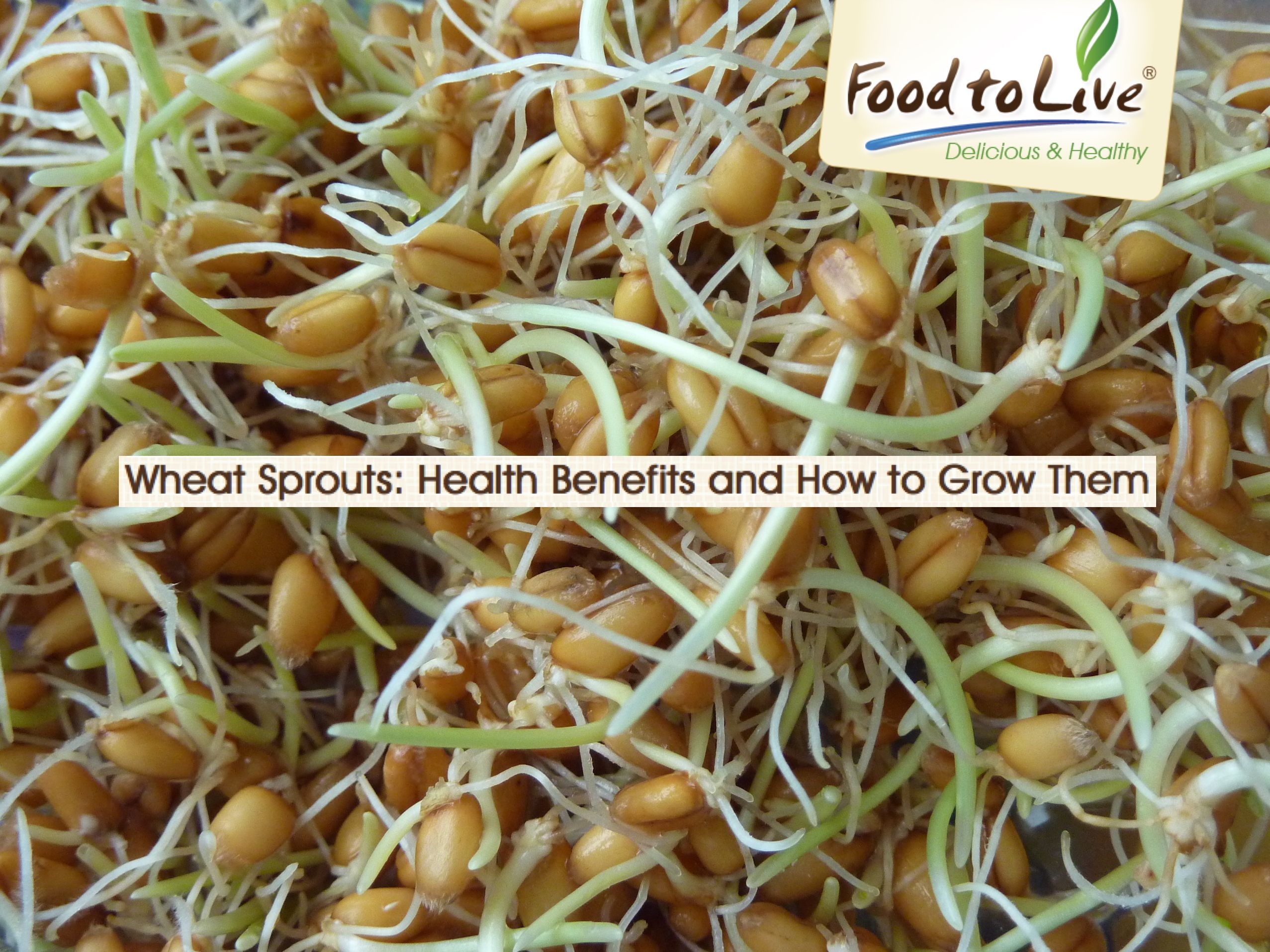Germinated wheat: cooking process and health benefits