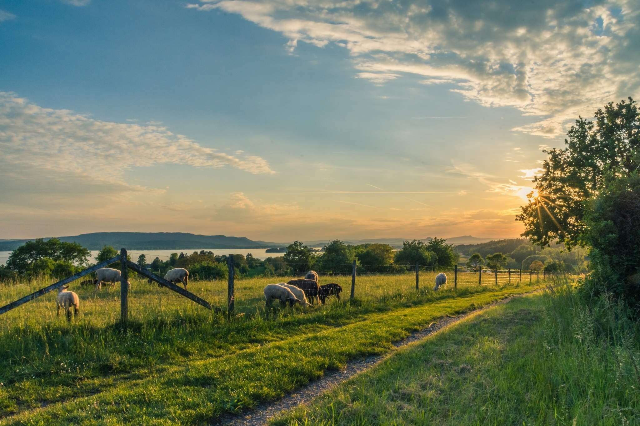 Countryside Cropland Dawn Dusk Farm Fence Field Grass Landscape Meadow Outdoors Pasture Path Rural Sheep Sunrise Sunset Trees Wallpaper Farm Pictures Beautiful Scenery Pictures Landscape Photography