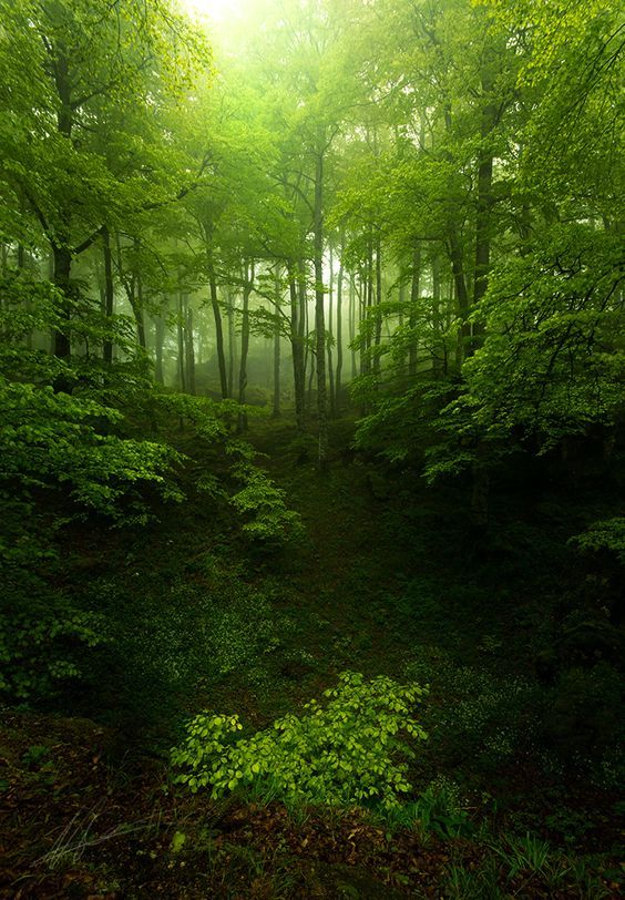 Forestland Enchanted Forest Nature Beautiful Nature