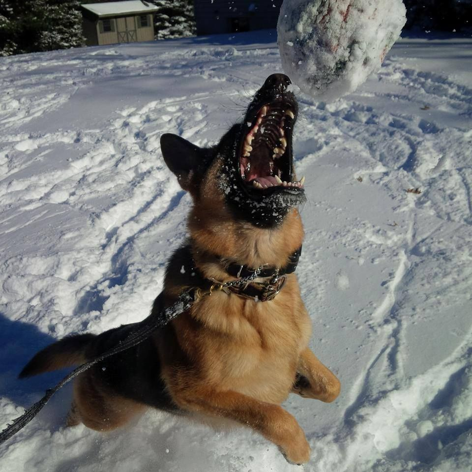 GSD in the snow