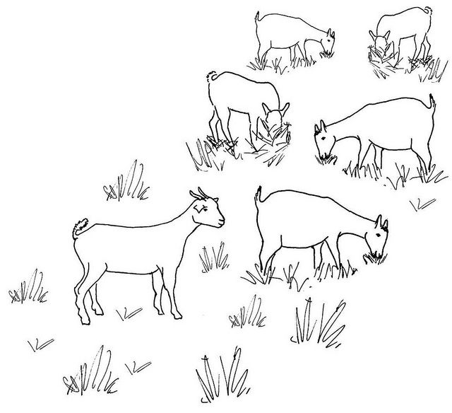 Boer Goat Coloring Pages