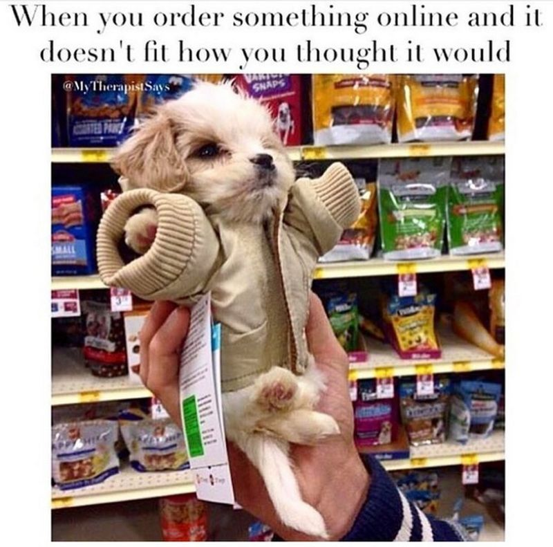 101 Best Funny Dog Memes When You Order Something Online And It Doesn T Fit How You Thought It Would Funny Dog Memes Cute Animals Funny Animals