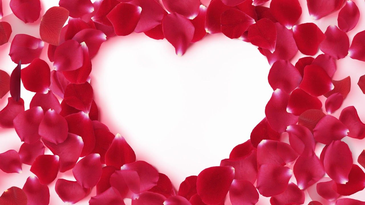 Red Heart Shaped Rose Petals Beautiful Dreamy Photography Wedding Bac Rose Petals Birthday Wishes Flowers Red Rose Petals