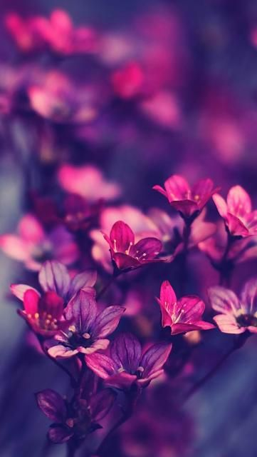 Permalink to Flower Wallpaper For Whatsapp