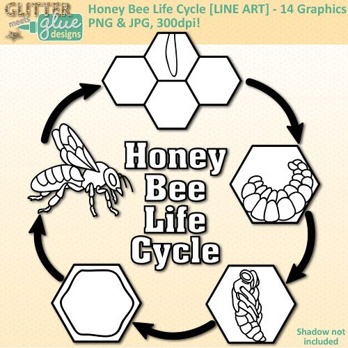Honey Bee Life Cycle Clip Art Line Art Biology Life Science Lesson Ideas Science Honeybee Education Ho Honey Bee Life Cycle Bee Life Cycle Life Cycles