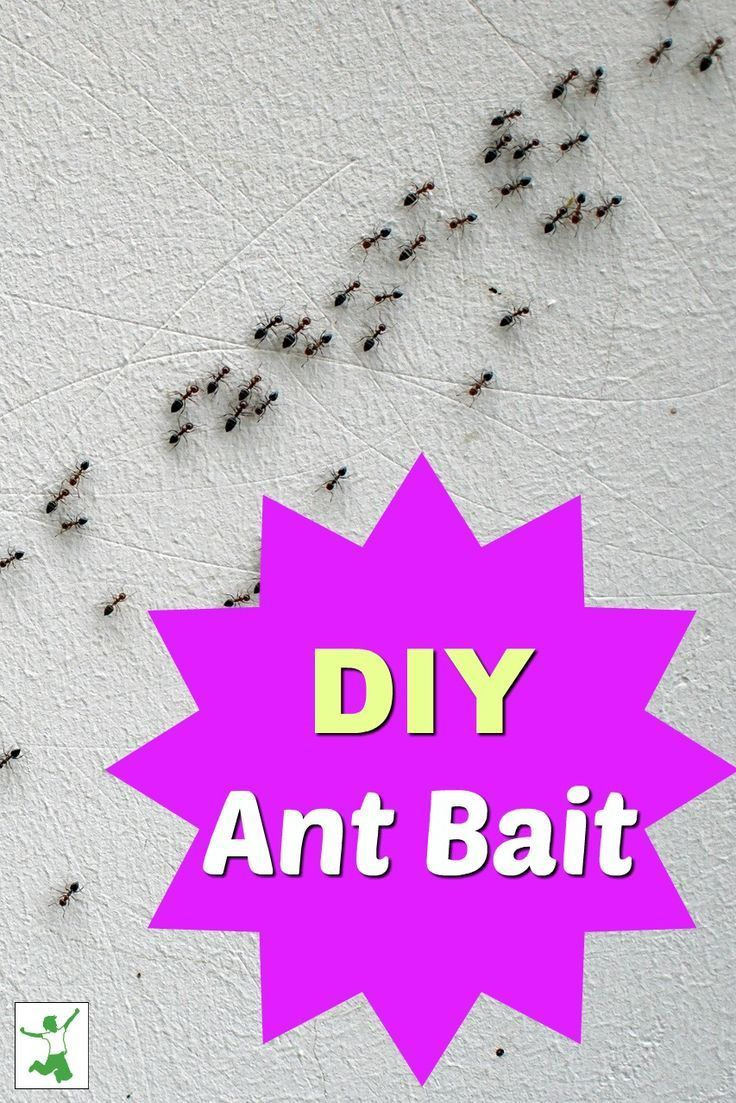 Homemade ant bait get rid of ants in the house fast