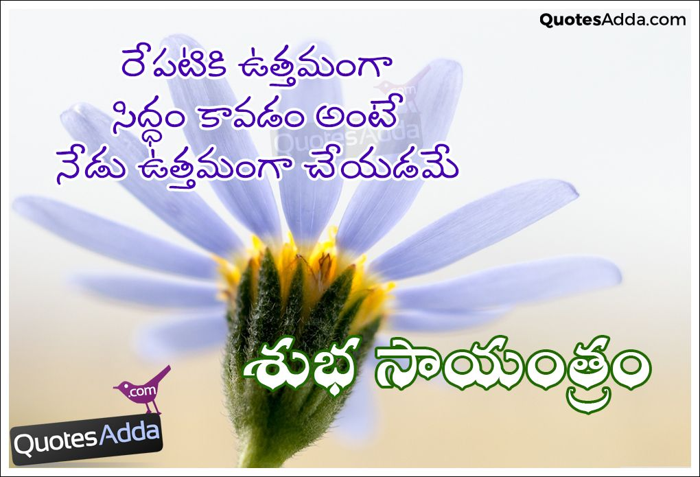 Cool Telugu Best Good Evening Messages Quotes Images Wallpapers Good Evening Wishes Good Evening Messages Paper Flowers