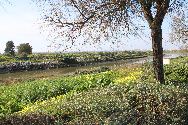 paisajes en chiclana de la frontera, junto al rio iro
