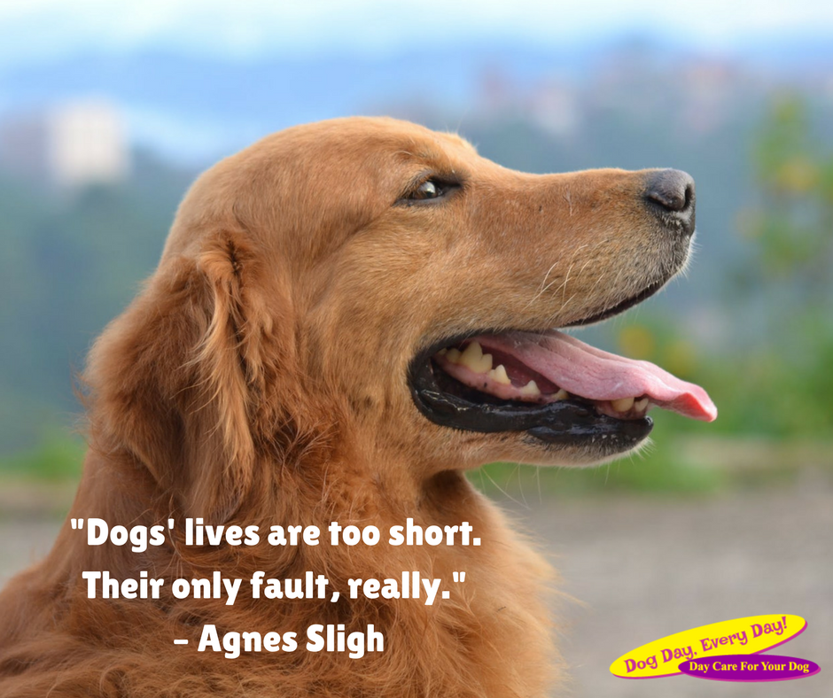 Home Dog Day Every Day Best Dog Quotes Dogs Famous Dogs