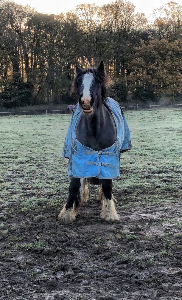 My horse in the winter tho | Equestrian | Horses, Horse ...