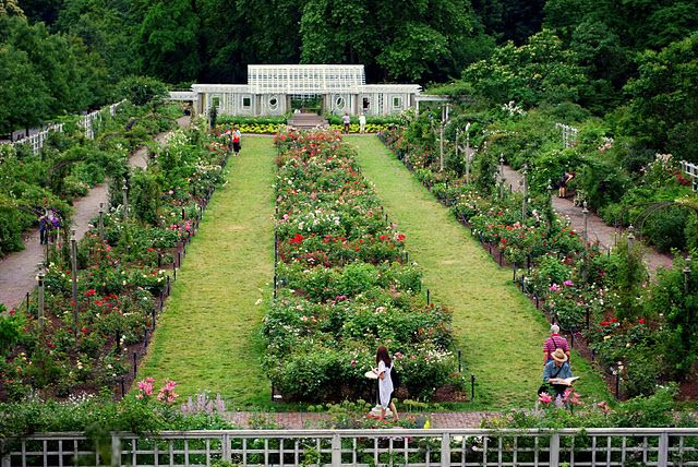 Explore Brooklyn Botanical Garden And More!